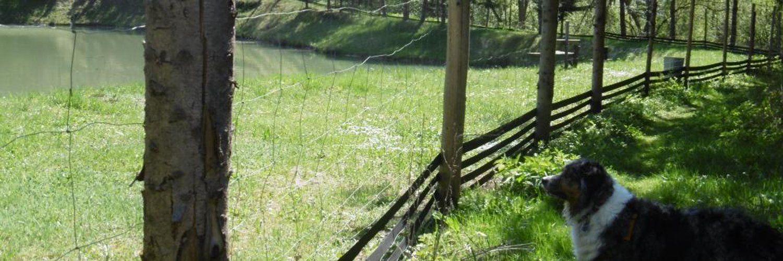 Pasywna ochrona przed atakami drapieżników - ogrodzenia